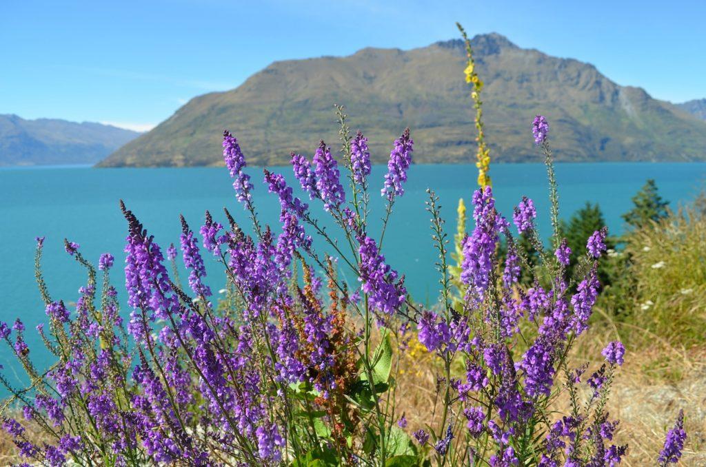 Jezioro Wanaka dziś, to przede wszystkim weekendowy kurort fot. pixabay