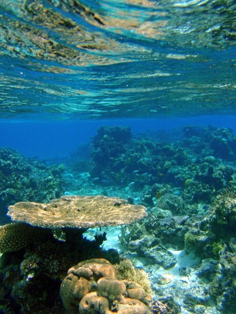 Nurkowanie na Fidżi fot. pixabay
