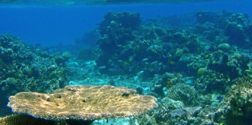 Atrakcje wyspy Fidżi – Natadola Beach