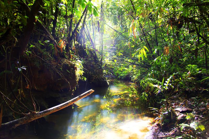 Dżungla to miejsce, w którym łatwo u ukąszenia insektów lub innych tropikalnych zwierząt