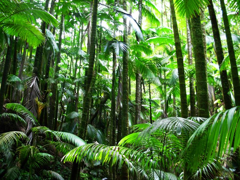W dżungli bardzo łatwo zarazić się różnymi tropikalnymi chorobami