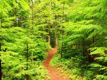 na-co-uwazac-w-lesie-aina-travel