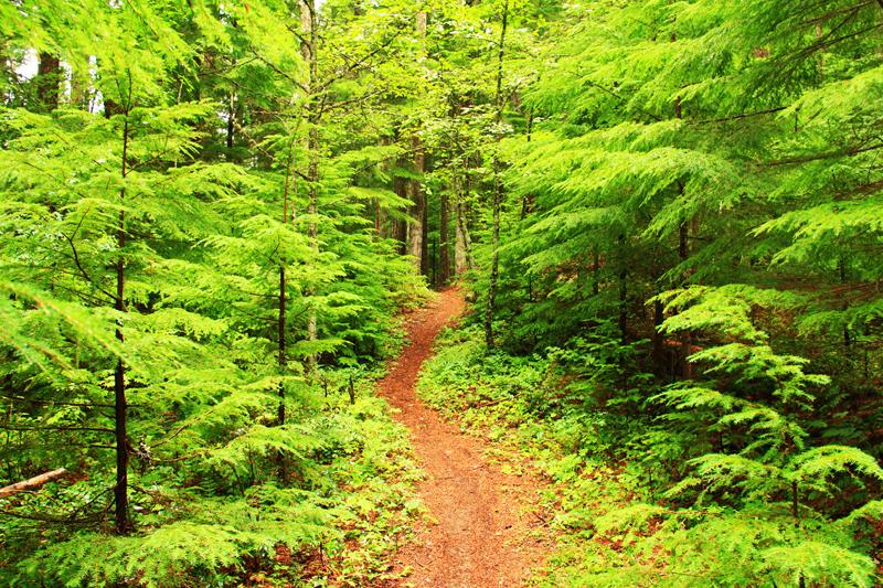 Na leśnych ścieżkach łatwo o skaleczenia, czy podrażnienia skórne