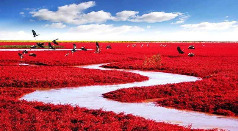 Czerwone pola Panjin, Chiny