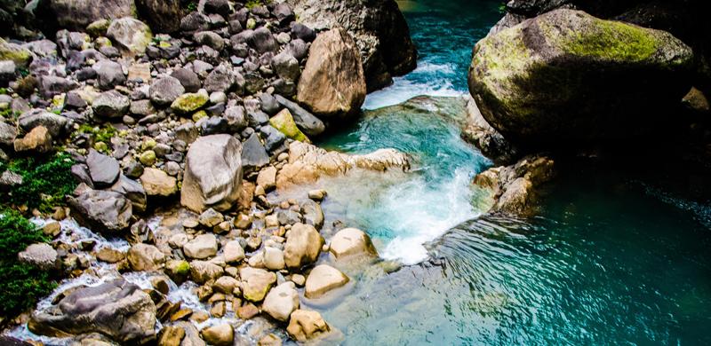 Intensywnie zielone lasy deszczowe są wizytówką regionu Meghalaya