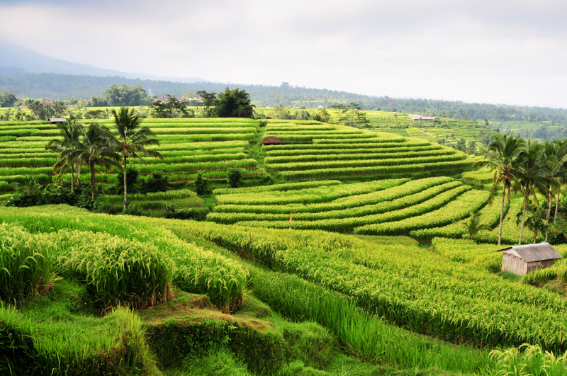 Malownicze tarasy ryżowe są wizytówką nie tylko Yunnanu, ale i całych Chin