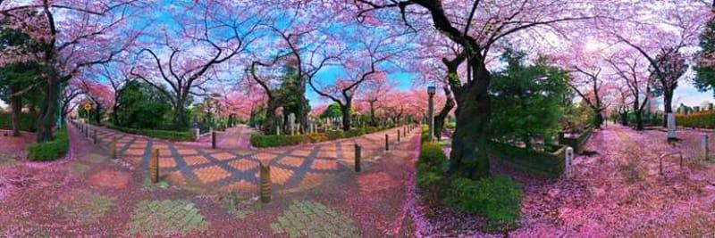 Cmentarz Ayoma, Japonia