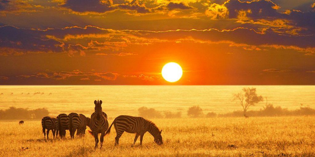 Na namibijskiej sawannie zobaczysz zebry, żyrafy i… można by tak dalej wymieniać.