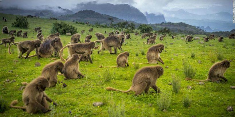 Etiopia zachwyca różnorodnością.
