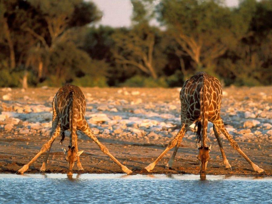 Namibia to bogactwo przyrody oraz…