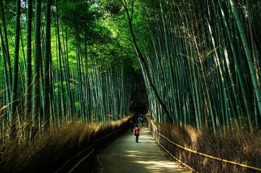 Bambusowy Las, Kioto, Japonia